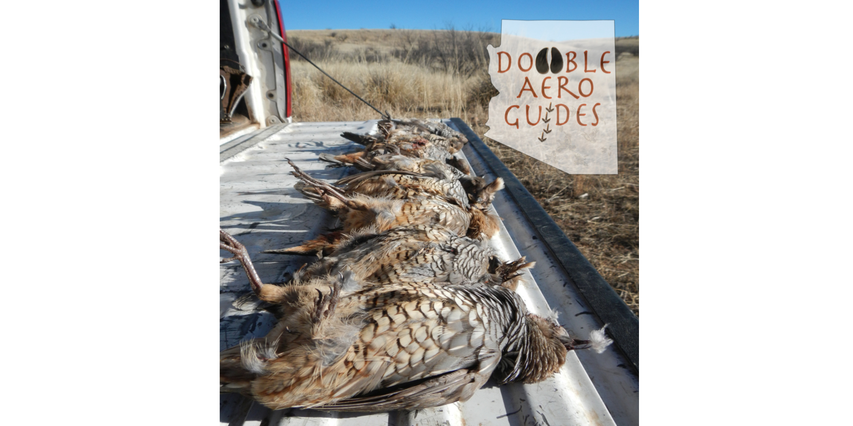 Arizona Quail Hunting Guide