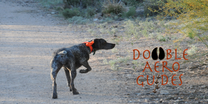 Arizona Quail Guide Guided Quail Hunt Service hunting guide Tucson