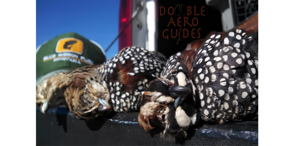 Arizona Guided Quail Hunt Tucson