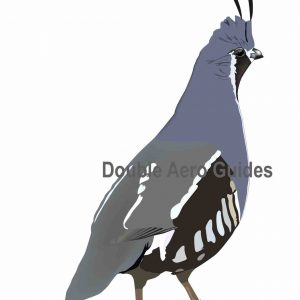 mountain quail sticker