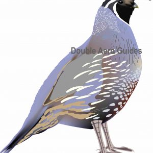 valley quail sticker